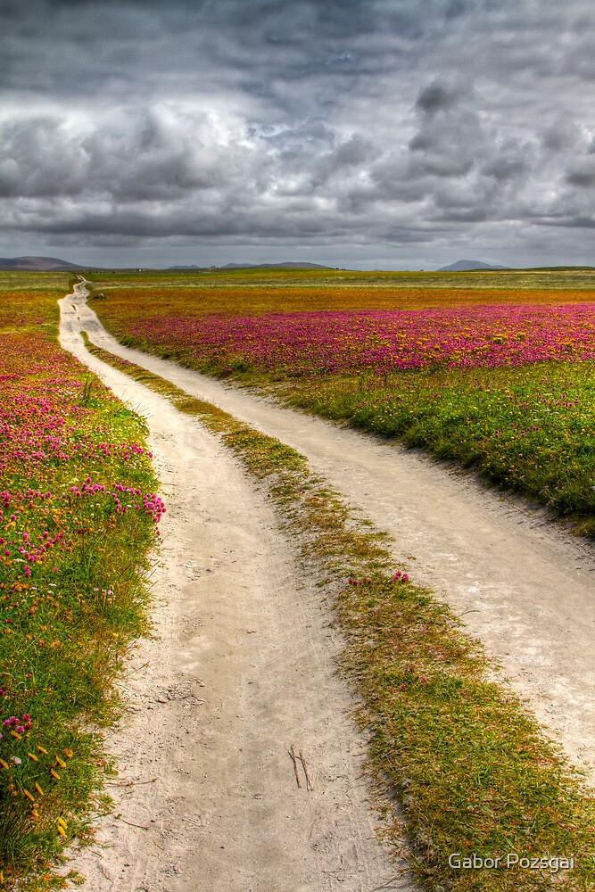 Clover fields at Balranald Nature Reserve, Scotland by Gabor Pozsgai