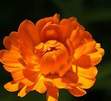 Orange Flower by Jena Ferguson