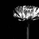 black and white by Jena Ferguson