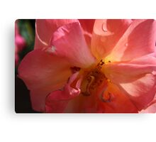 A PINK ROSE JUST FOR YOU  Canvas Print