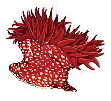 Strawberry anemone by cnillustration