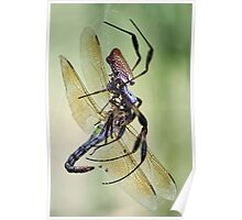 Dragonfly Falls  Prey to a Spider Poster