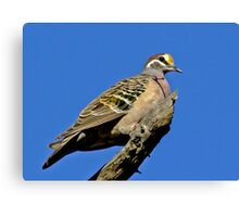 Bronzewing On High Canvas Print