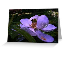 Magnolia Glory Greeting Card