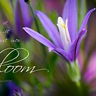 Munstead Lavender by JulieLegg