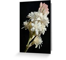 Polianthes flower Greeting Card