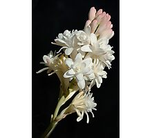 Polianthes flower Photographic Print