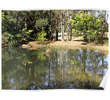 Wattle Reflections (out West Cambe. way) Poster