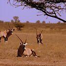 Wild Africa by LivWildlife