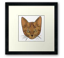 Cat / Kitten Framed Print