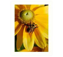 Sweet Nectar - Bridge of Flowers Art Print