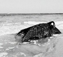 Shipwrecked - Washed Ashore Salisbury, MA by dwornham