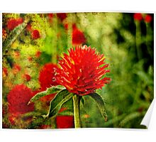 The Red Clover Poster