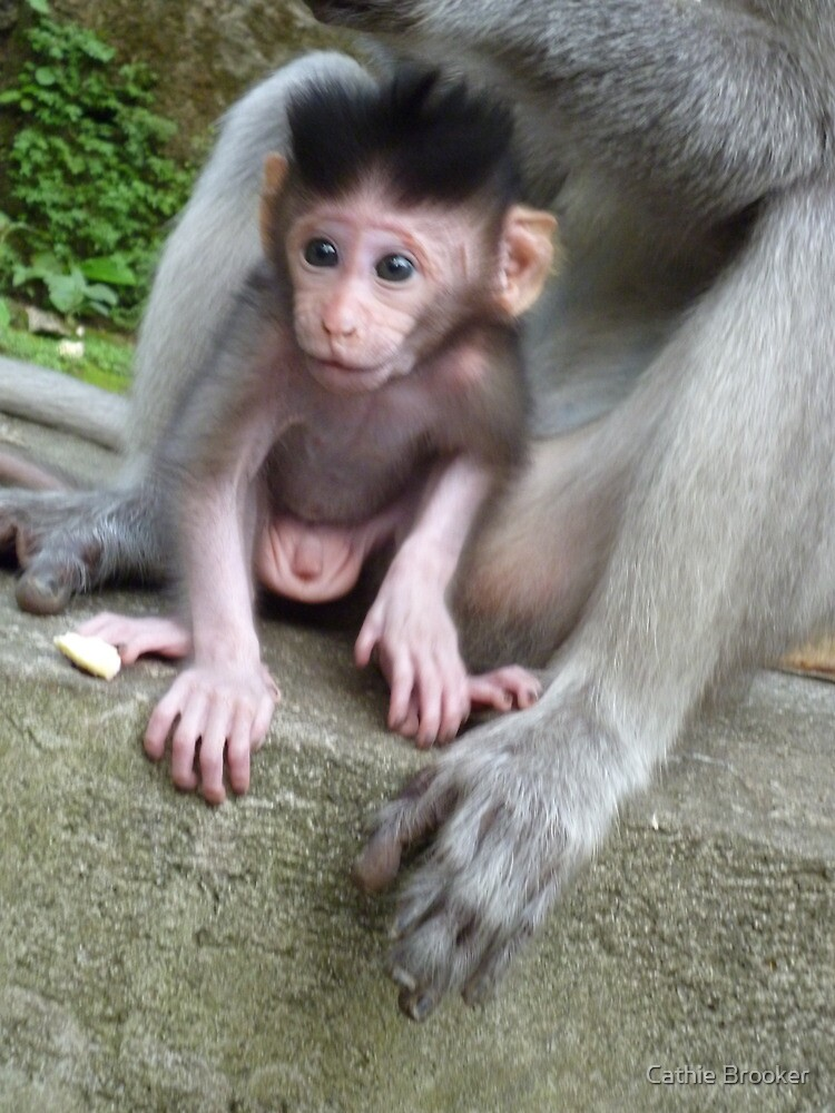 Bali, Monkey Forest, Ubud by Cathie Brooker