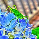 Critter on a Hydrangea by Kate Eller