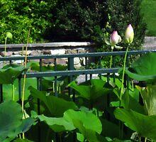 The Lotus Pond - Sigurtà - Italy by sstarlightss