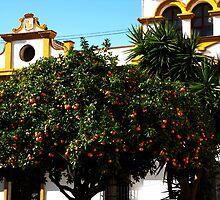 Orange by AndreCosto