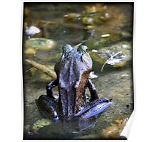 Yoga Frog Poster