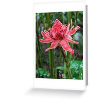 Torch Ginger (Costa Rica) Greeting Card