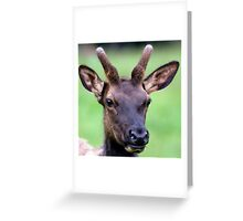 The Yearling Greeting Card