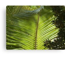 Sunlight through the fronds Canvas Print