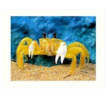 Mantou Crab, San Juan, Puerto Rico Art Print