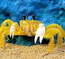 Mantou Crab, San Juan, Puerto Rico by opticallusion
