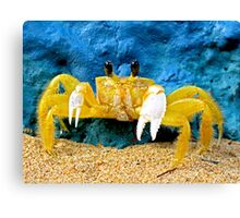 Mantou Crab, San Juan, Puerto Rico Canvas Print