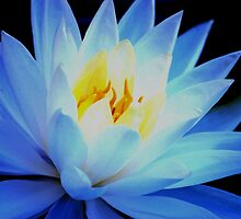 Blue waterlily by loiteke