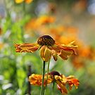 September Glow by Astrid Ewing Photography