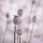 poppy queen(s) by Priska Wettstein