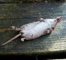 Mouse Gone to the other Side by HeklaHekla