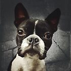 Harrison the Boston Terrier by Ludwig Wagner