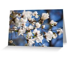 White Magnolia spring flowers bunch Greeting Card
