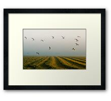 Gras harvest Framed Print
