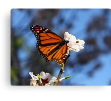 ~ Monarch ~ Canvas Print