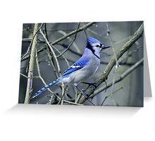Blue Jay in the Brush Greeting Card