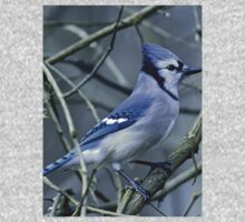Blue Jay in the Brush Baby Tee