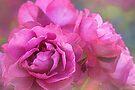 fully bloomed by Teresa Pople