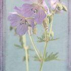 meadow beauties III by Iris Lehnhardt