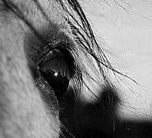 Spanish eye by Penny Kittel