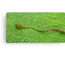 Red Banded Water Snake in Camouflage Canvas Print