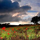 Late summer by MWhitham