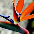 Like a beautiful Bird by Esperanza Gallego