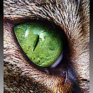 Cat Eye by AngieBanta