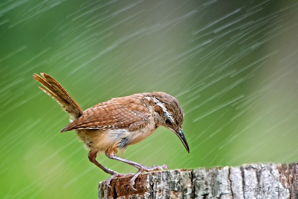 Rainy days and Mondays always get me down . . . by Bonnie T.  Barry