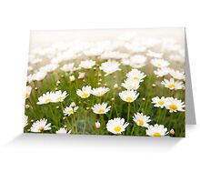 White herb camomiles clump Greeting Card