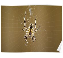 A Webaholic Spider Poster