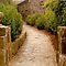 Cobblestone or stone roads and walks (no formed bricks)