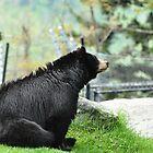 Thinking Bear by Sonja Dover